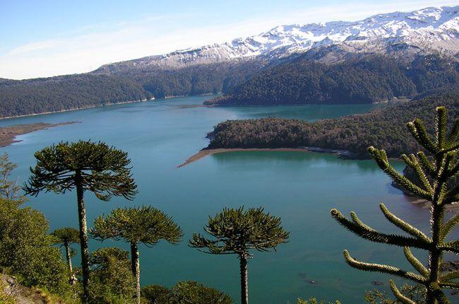 Parque Nacional Conguillio, Chile.