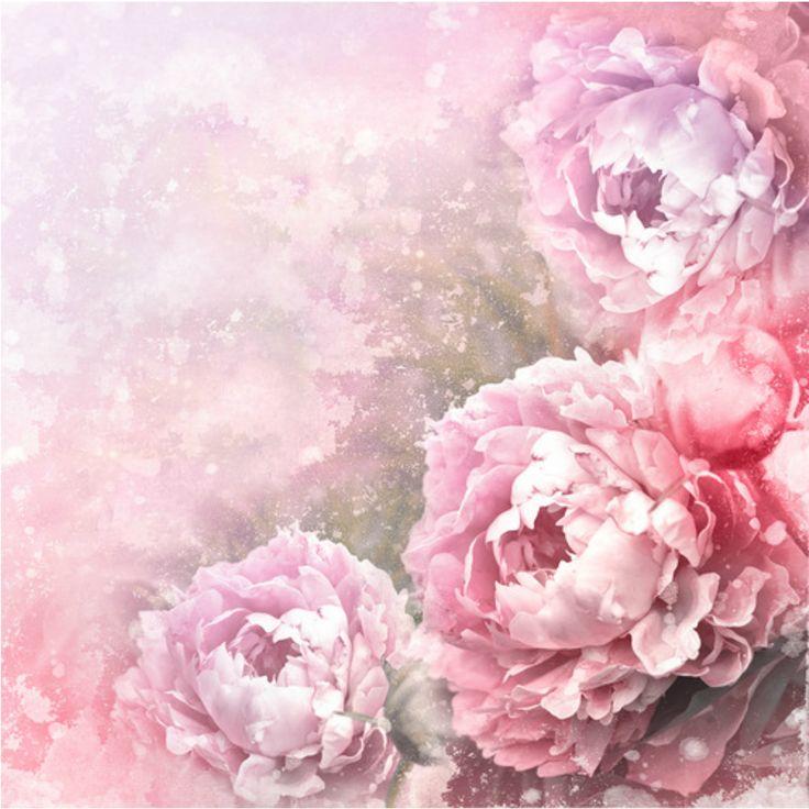 fond pivoines rose mauve 2