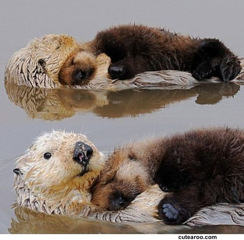 They love each-otter, and I love each otter
