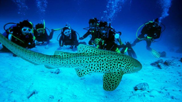 While a part of India, Andaman is geographically closer to Thailand, and boasts of some of the best dive sites in Asia. Read more about diving in the Andamans here