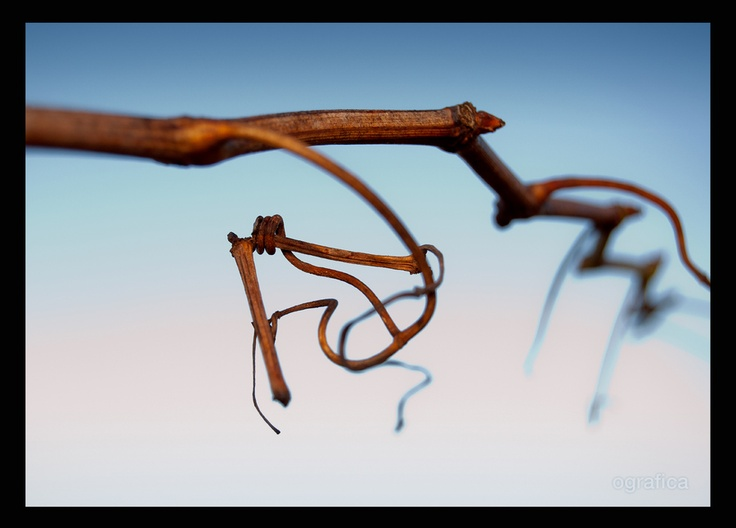 tendril by Oleguer Subirats, via 500px