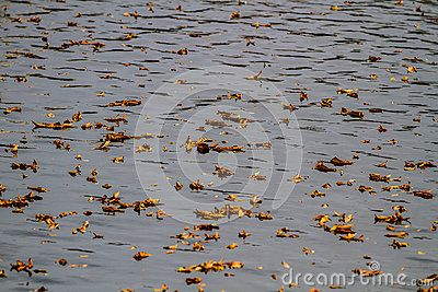 Autumn leaves on the water.