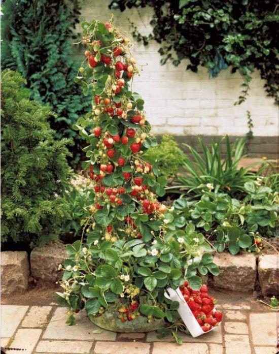 les 45 meilleures images propos de jardinage sur pinterest jardins jardinage en pots et. Black Bedroom Furniture Sets. Home Design Ideas