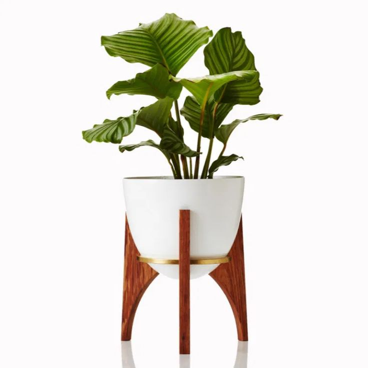 Winter Garden – COOL HUNTING® Modern Planters, Large Planters, Indoor Planters, Outdoor Plants, Hanging Planters, Planter Pots, Rocket Plant, Diy Plant Stand, Plant Stands