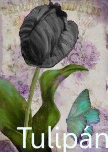 Tulipán negro: Estoy sufriendo.