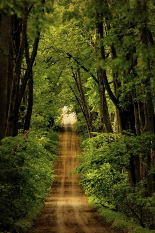 Iphone Wallpaper Forest Nature