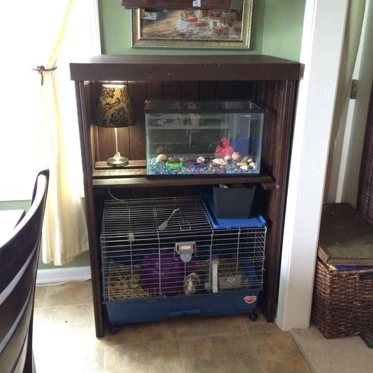 Best 25 guinea pig cost ideas on pinterest rabbit cage for Simple guinea pig cage