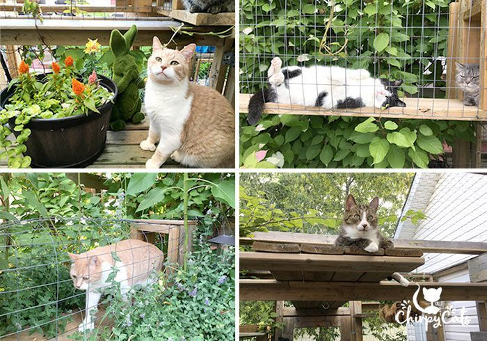 How To Build A Catio Your Cat Will Love Catio Outdoor Cat Enclosure Cat Playground Outdoor