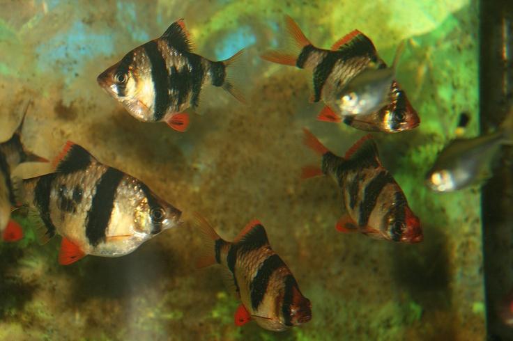 Best 25 Tropical Aquarium Ideas On Pinterest Tropical