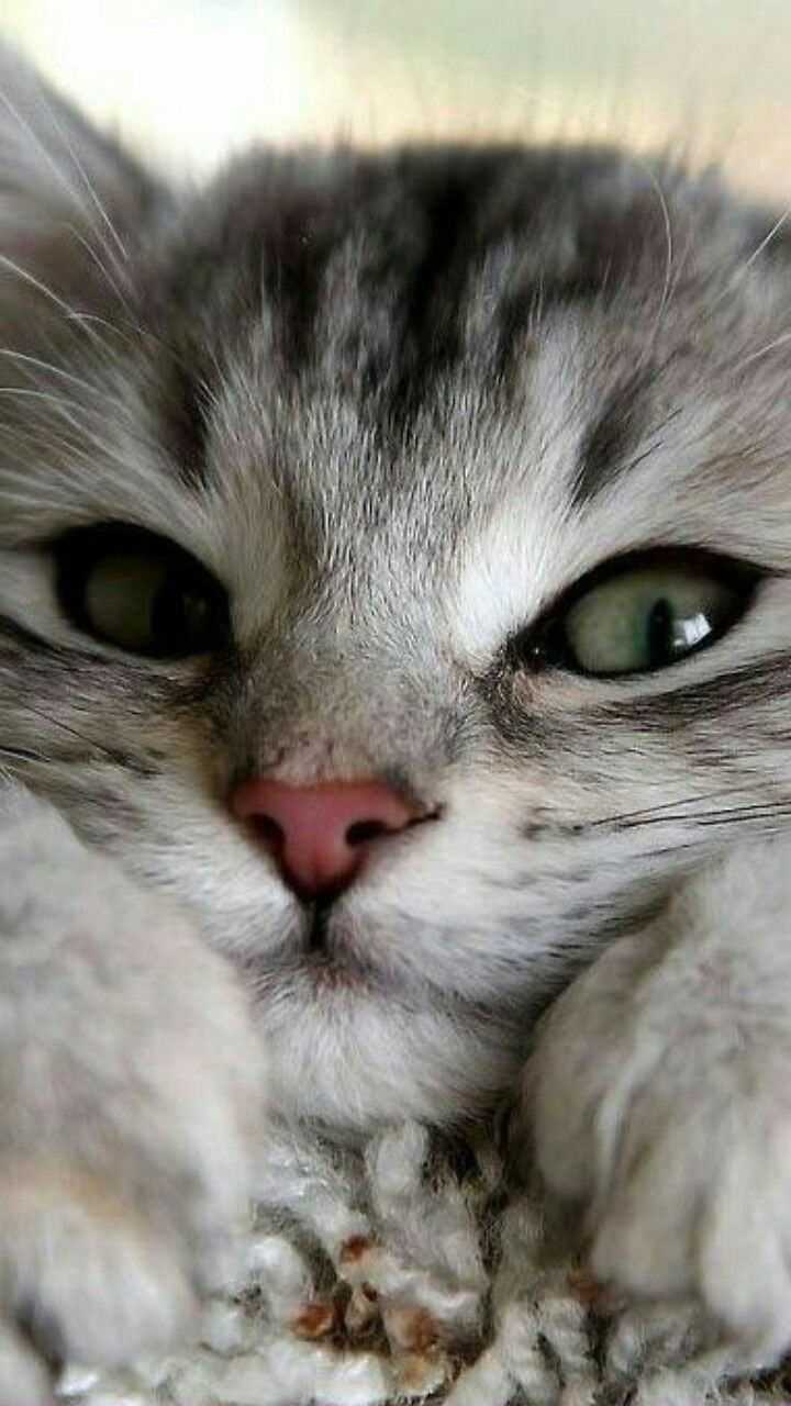 Pin By Oskar Natural Pet Remedies On Cat Love In 2020 Cute Cats Cute Animals Cats
