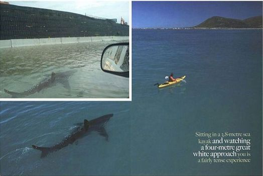 Street Shark – This photo of a shark swimming down the flooded streets in Puerto Rico after Hurricane Irene in August 2011 (photo in upper corner) was just a combination of two pictures. The shark was actually photographed for the African Geographic in 2005 following a kayak, not swimming down the streets of Puerto Rico.