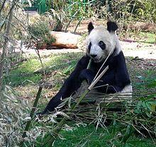 Chapultepec Zoo - Wikipedia, the free encyclopedia
