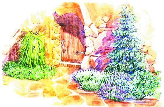 Сад из хвойных пород - фото 19