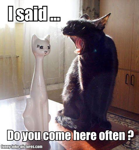 Funny Porcelain Cat Joke Meme Picture | Funny Joke Pictures