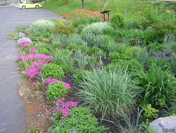 22 best Rain Gardens images on Pinterest Rain garden Garden