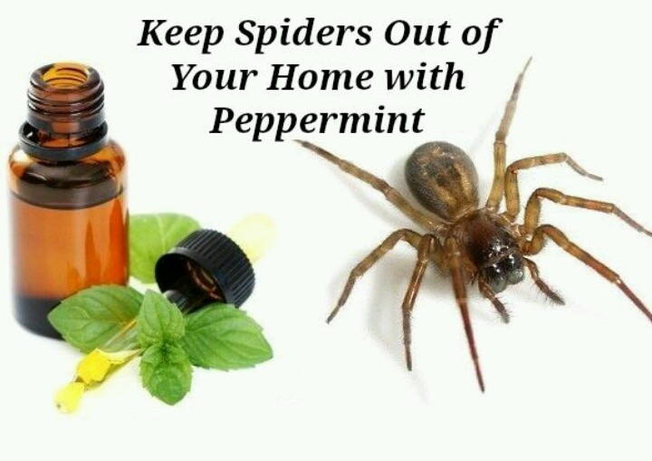17 best images about must try on pinterest sore throat for Home remedies to keep spiders away