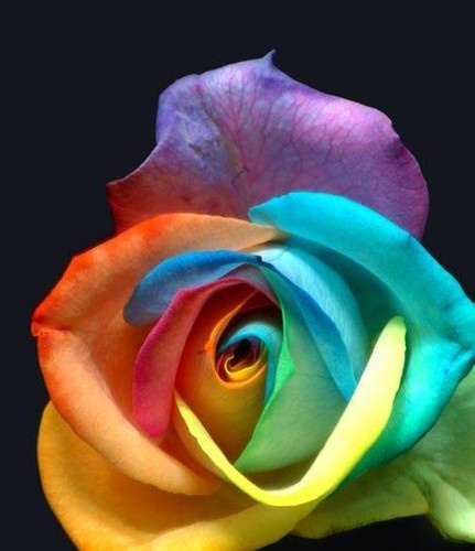 Love to do this: Funny Sayings, Bridal Bouquets, Food Colors, White Rose, Summer Colour, Rainbows Rose, Flowers Girls, Roses, Red Rose