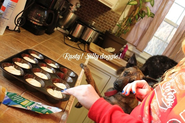 Pictures of our silly pets photo bombing our blog photo shoot. #pets