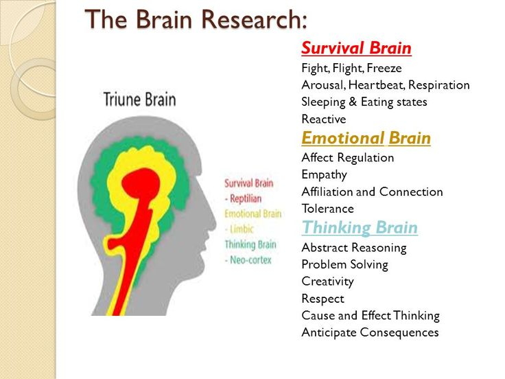 triune brain picture - Google Search