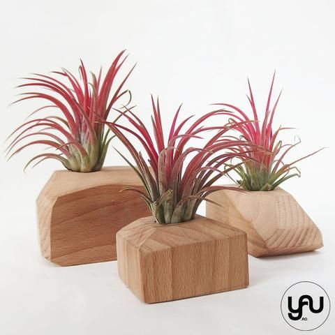 MARTURII plante aeriene in suport din lemn GEOMETRIC - M22 - https://www.yau.ro/collections/marturii-nunta-si-botez?page=1 - yauconcept - elenatoader