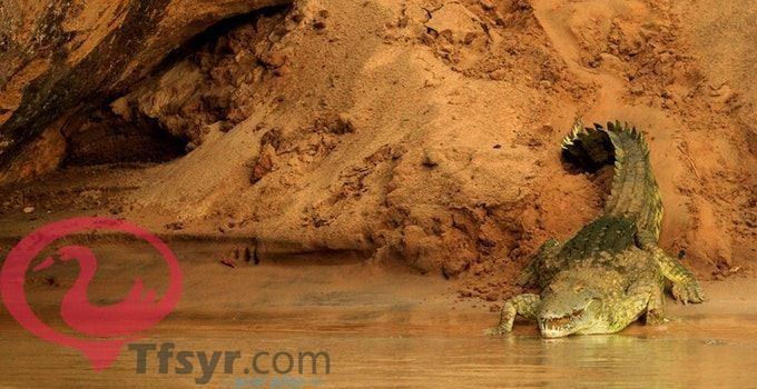 تفسير حلم رؤية التمساح في المنام لابن سيرين 4 Natural Landmarks Landmarks Travel