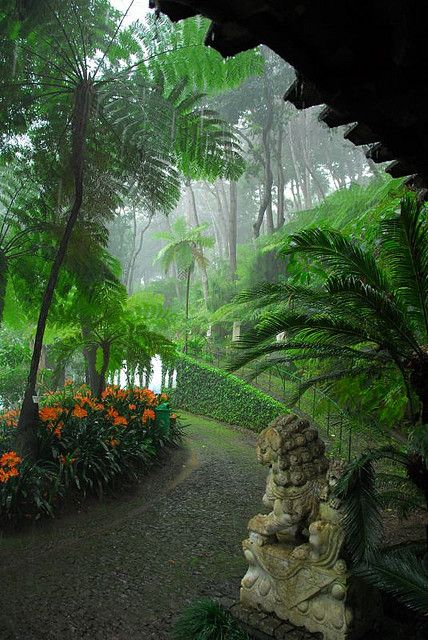 Magnifico jardim na Ilha da Madeira, Portugal.