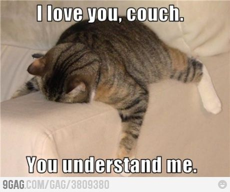 .: Long Day, Iloveyou, Couch, Funny Pictures, Funny Cat, My Life, Fat Cat, So True, Funny Animal