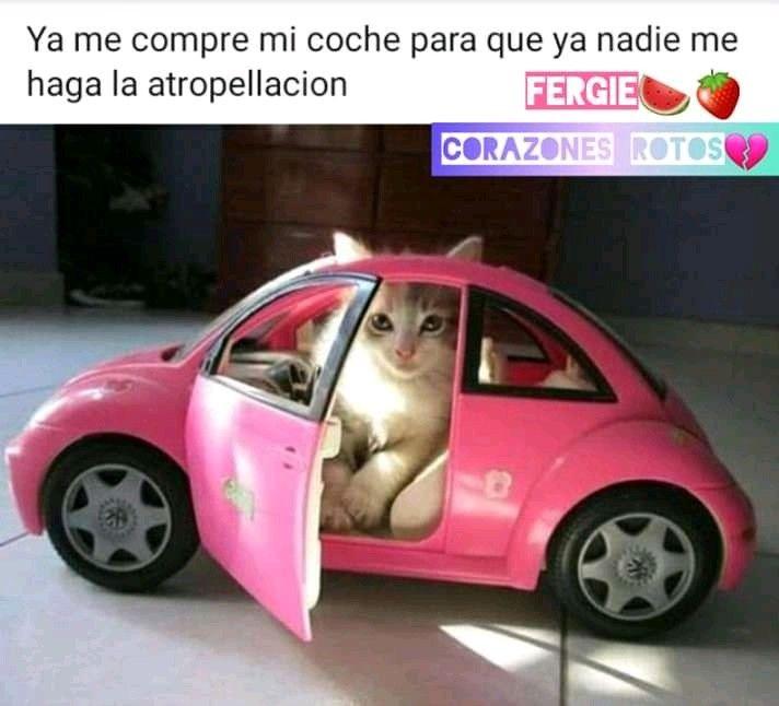 Pin De Pamchu Castellano En Mininos Funny Meme Gato Memes De Animales Divertidos Humor De Animales