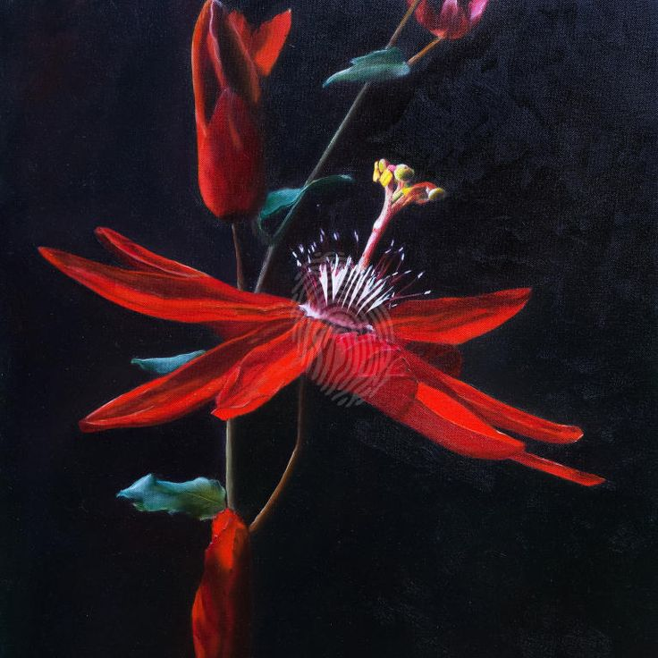 Red passion flower - Elena Valerie - oil painting