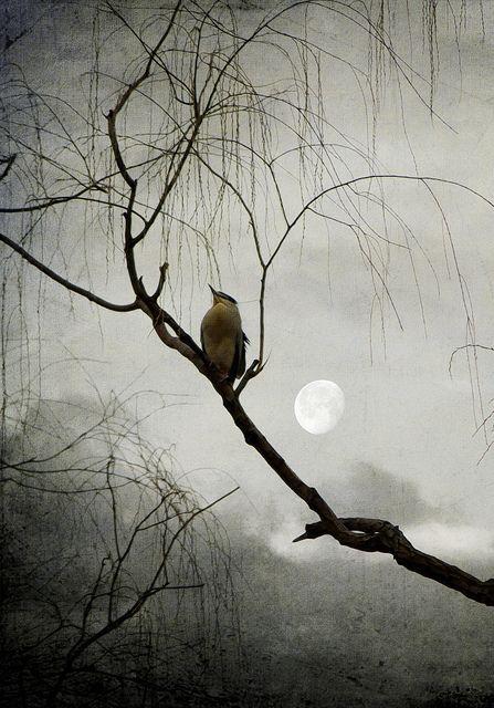 bird on a branch on a foggy night by yunhua