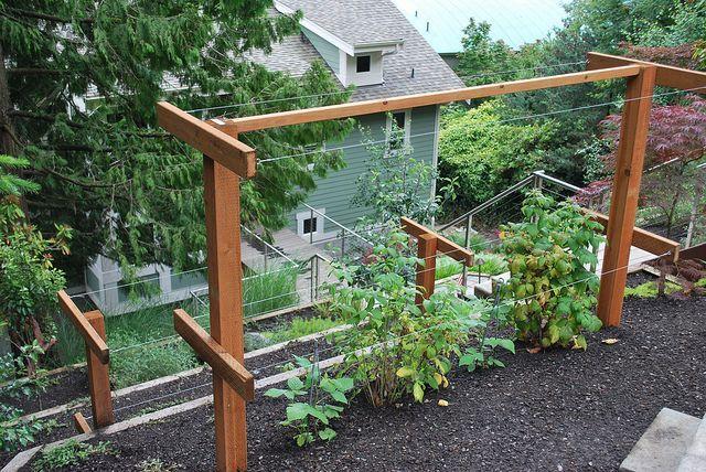 Raspberry gardens | Raspberry Trellis
