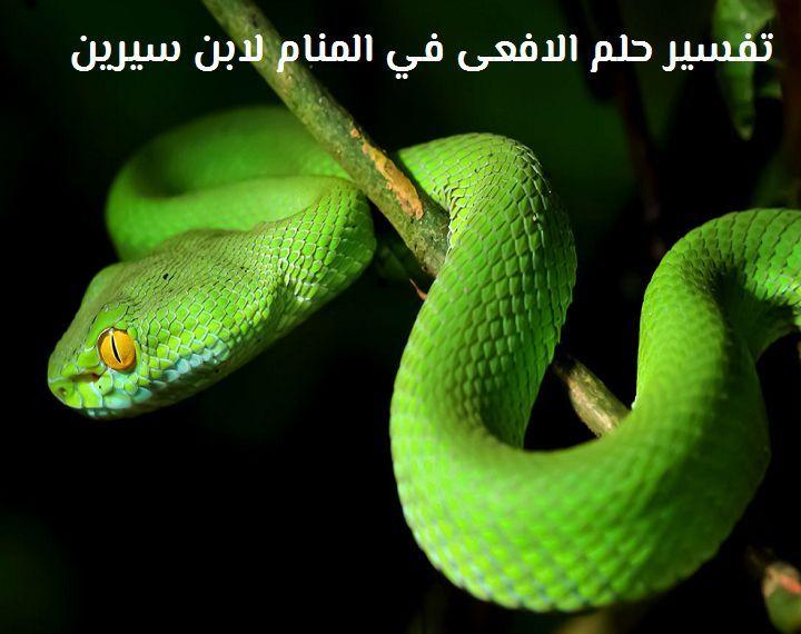 ما هو تفسير حلم الأفعى في المنام لابن سيرين موقع مصري Snake Images Snake Wildlife Wallpaper