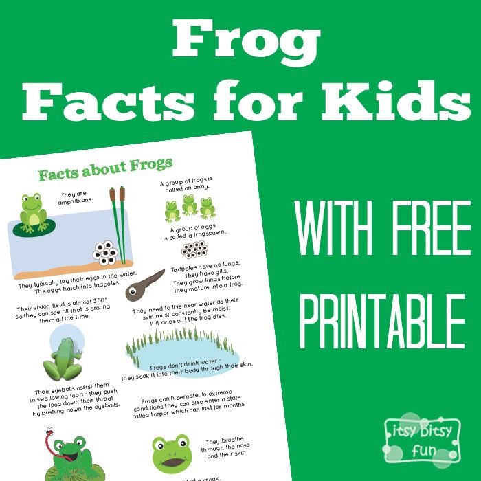 FREE-Frog Facts for Kids...here are a ton more fun facts for kids about these amphibians that your kids (and you) just need to know (as some are downright odd).