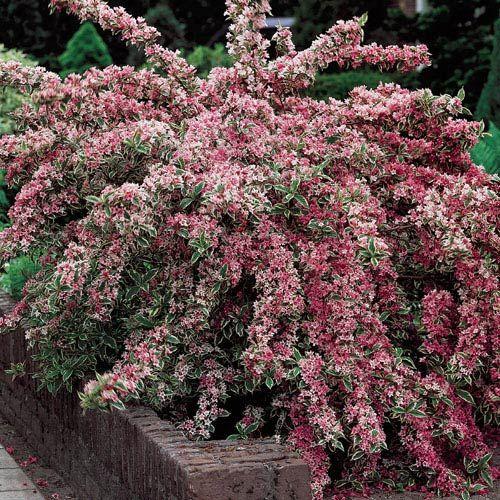 Maroon Garden Ideas: 30 Best Nursery Stock Images On Pinterest