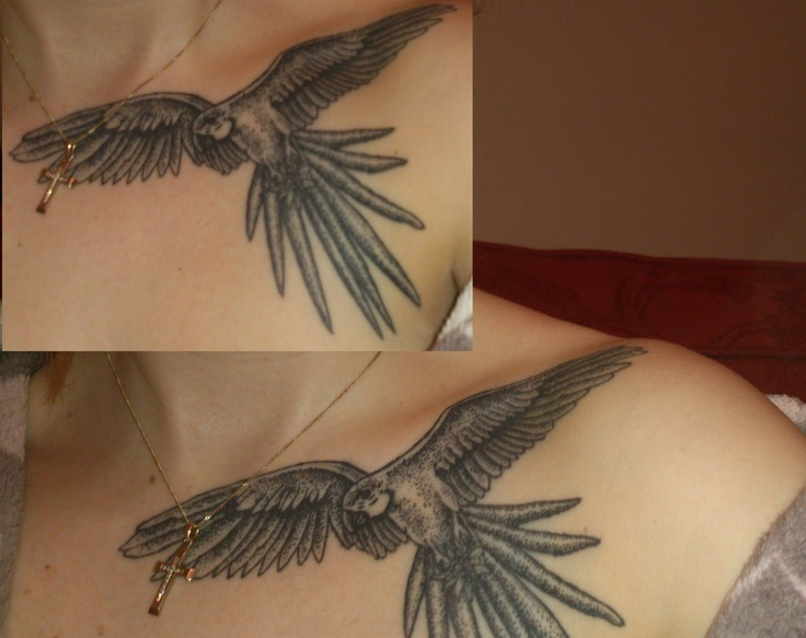 48 best images about parrot tattoos on pinterest jack green feather tattoo design and bird. Black Bedroom Furniture Sets. Home Design Ideas