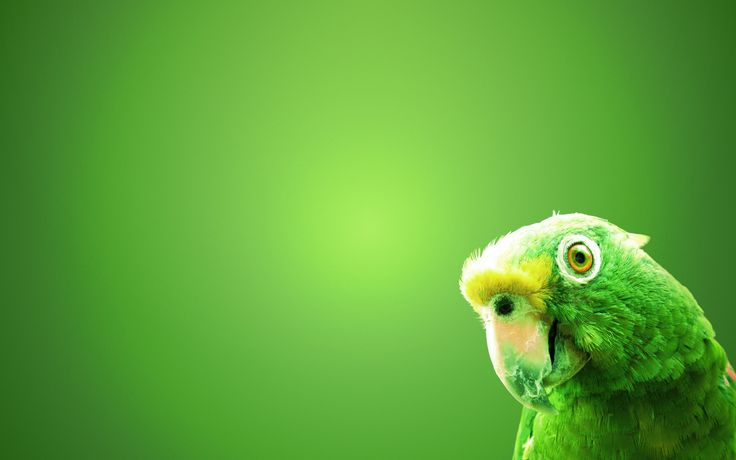 Green Parrot | Download HD Wallpapers From HD Wallpapers MG
