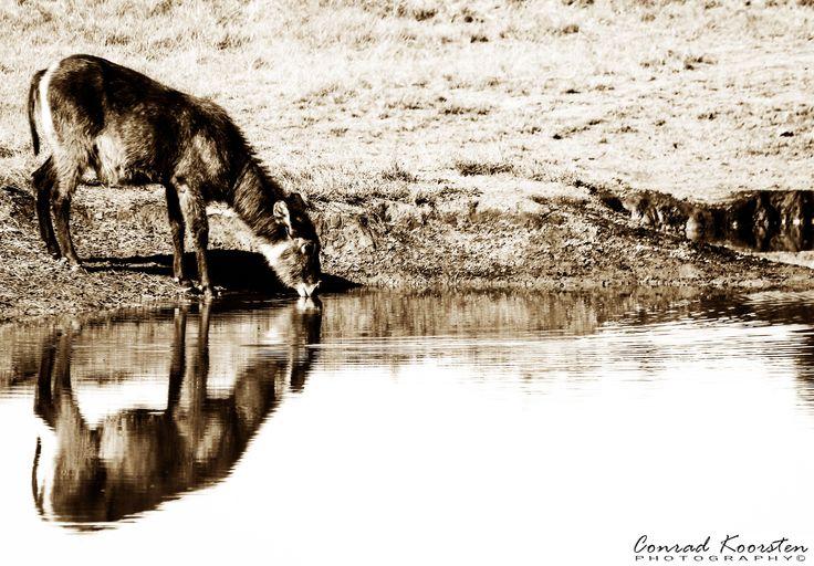 Conrad Koorsten Photography