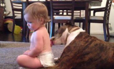 El perro que ofrece un 'baño canino' a un bebé se hace viral -- Qué.es --