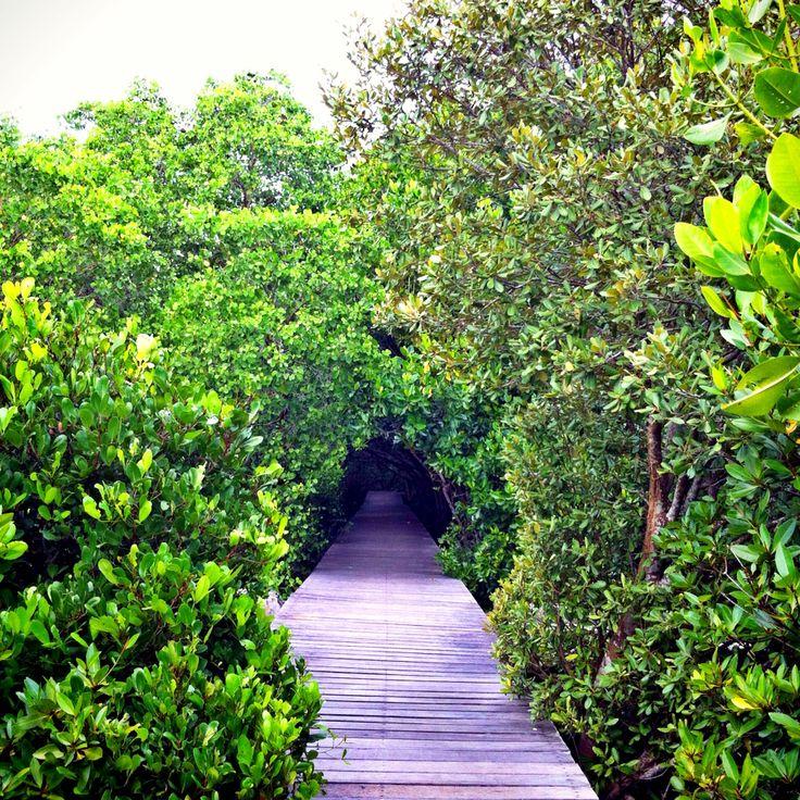Mangrove @hutan raya Bali
