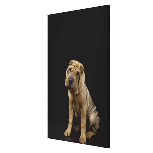 >>>Low Price          A Shar-Pei dog Stretched Canvas Print           A Shar-Pei dog Stretched Canvas Print This site is will advise you where to buyDeals          A Shar-Pei dog Stretched Canvas Print Review from Associated Store with this Deal...Cleck Hot Deals >>> http://www.zazzle.com/a_shar_pei_dog_stretched_canvas_print-192847812967557481?rf=238627982471231924&zbar=1&tc=terrest