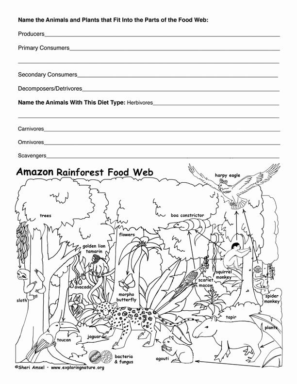 Food Chain Worksheet Pdf Beautiful Amazon Rainforest Food Web