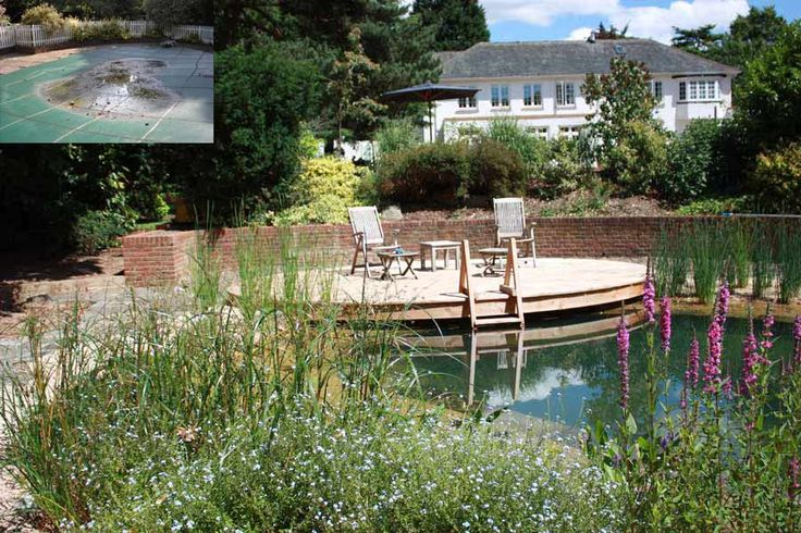 65 best pool to pond conversion and building ponds images for Koi pond swimming pool conversion