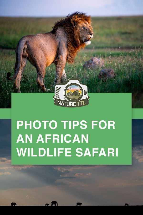 In This Wildlife Photography Tutorial Learn How To Take Better