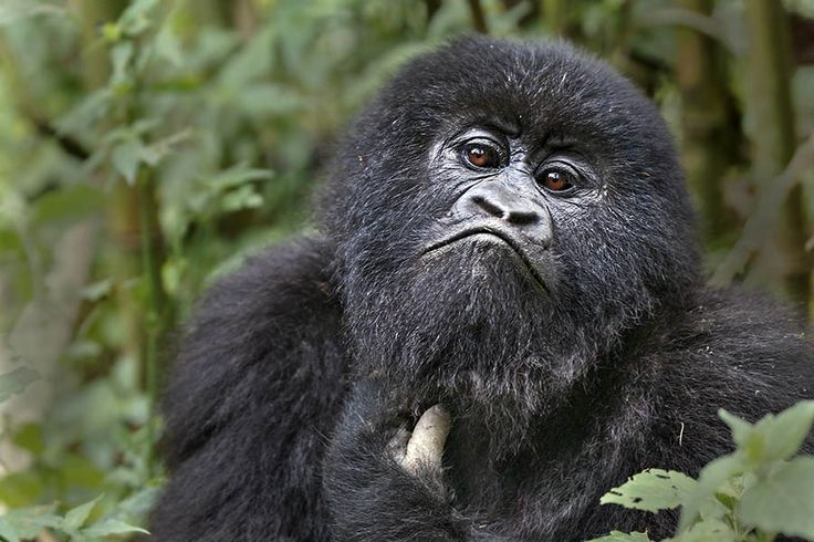 CM_Benny-Rebel-Fotoreise-Ruanda.jpg