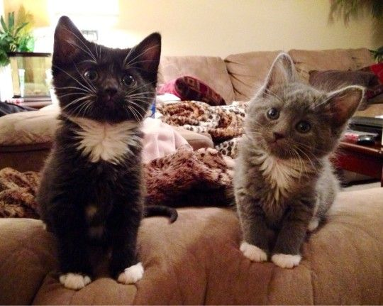 Cute kittens:Can you tell they're sisters?