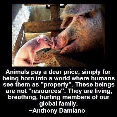 Pro vegan: Animals pay a dear price, simply for being born into a world where humans see them as property...