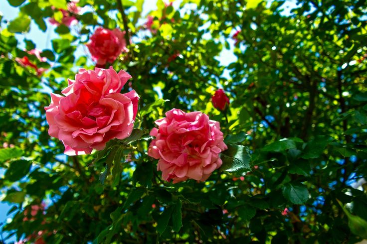 https://flic.kr/p/td7CYD | Májusi virágok