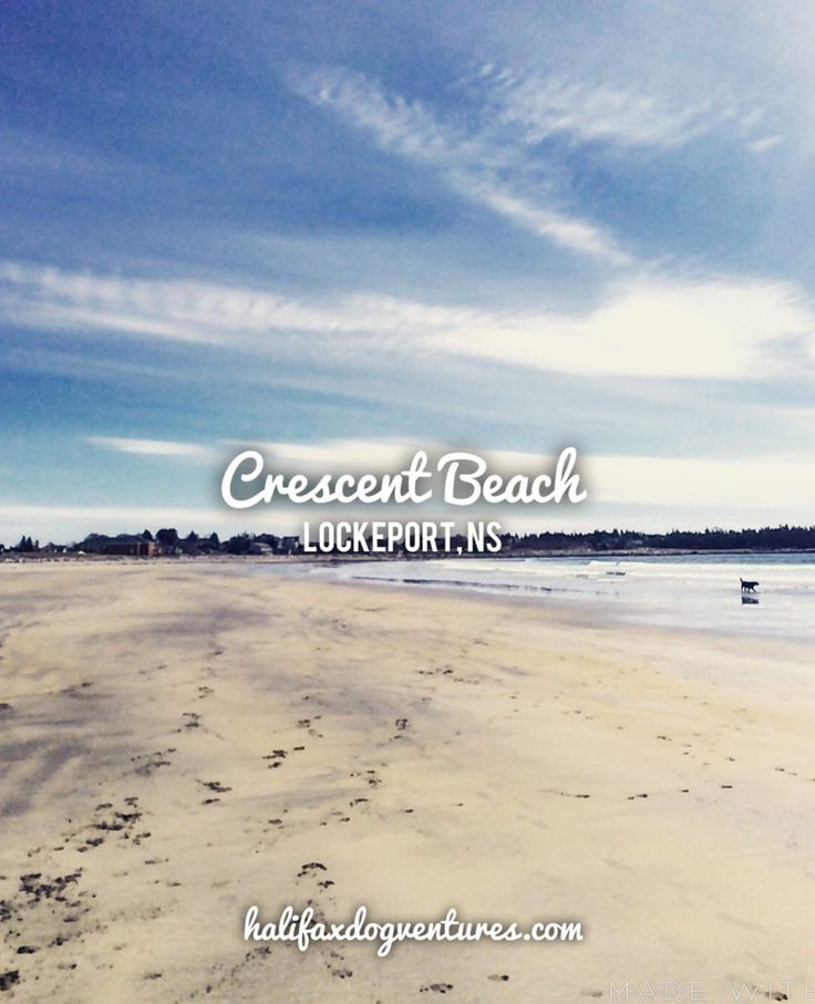 Crescent Beach in Lockeport, Nova Scotia is truly a gem. It offers wide open spaces for running and playing, white sand, and sparkling blue waters. halifaxdogventures.com