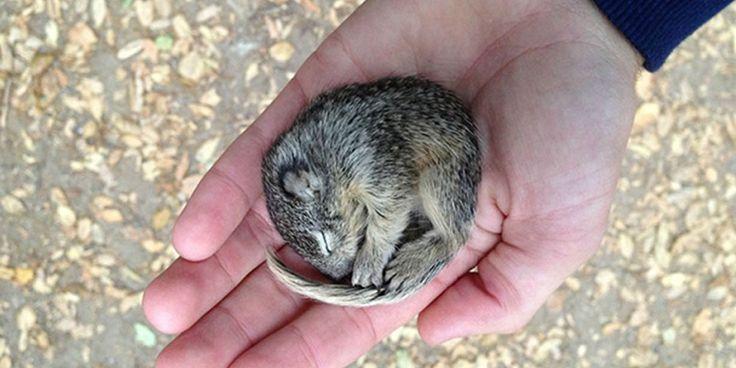 Nick Radford stava facendo qualche scatto vicino casa sua in California quando scoprì un piccolo cucciolo di scoiattolo abbandonato che stava morendo di fame, sete e freddo.