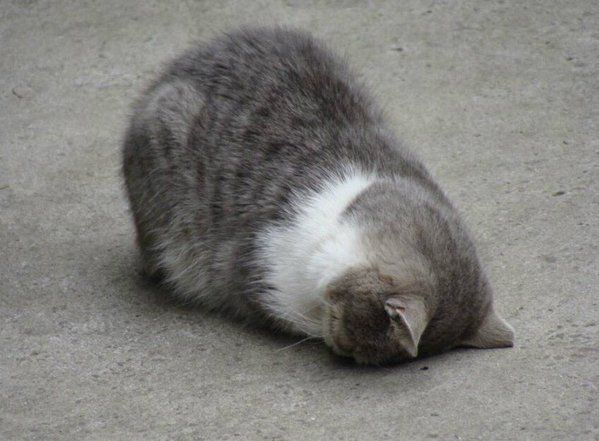 Утро понедельника